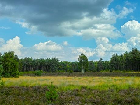 Molenvelden Bos Omgeving (1)